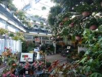 2018-01-14花と泉の公園ベゴニア館32