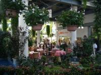 2018-01-14花と泉の公園ベゴニア館37