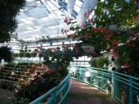 2018-01-14花と泉の公園ベゴニア館36