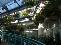 2018-01-14花と泉の公園ベゴニア館35