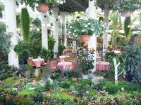 2018-01-14花と泉の公園ベゴニア館43