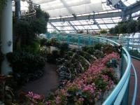 2018-01-14花と泉の公園ベゴニア館41