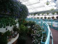 2018-01-14花と泉の公園ベゴニア館51