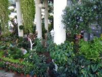 2018-01-14花と泉の公園ベゴニア館50