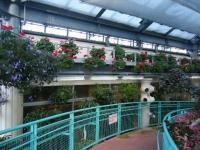 2018-01-14花と泉の公園ベゴニア館49