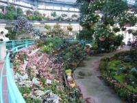 2018-01-14花と泉の公園ベゴニア館48