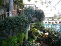2018-01-14花と泉の公園ベゴニア館47