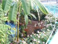 2018-01-14花と泉の公園ベゴニア館63