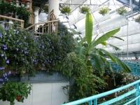 2018-01-14花と泉の公園ベゴニア館61