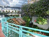 2018-01-14花と泉の公園ベゴニア館60