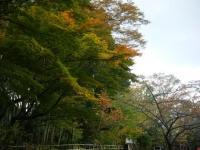 2017-10-28重箱石317