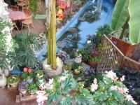 2018-01-14花と泉の公園ベゴニア館66