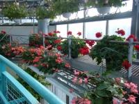 2018-01-14花と泉の公園ベゴニア館65