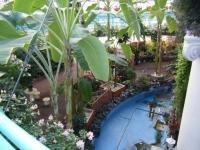 2018-01-14花と泉の公園ベゴニア館82