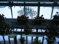 2018-01-14花と泉の公園ベゴニア館86