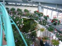2018-01-14花と泉の公園ベゴニア館85