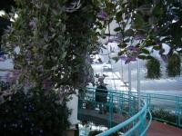 2018-01-14花と泉の公園ベゴニア館90