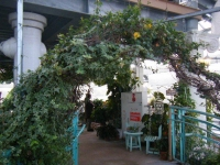 2018-01-14花と泉の公園ベゴニア館99