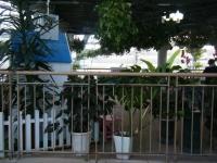 2018-01-14花と泉の公園ベゴニア館98
