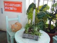 2018-01-14花と泉の公園ベゴニア館101