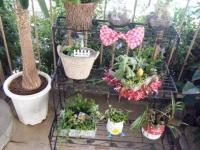 2018-01-14花と泉の公園ベゴニア館113