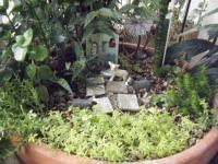 2018-01-14花と泉の公園ベゴニア館135