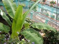 2018-01-14花と泉の公園ベゴニア館143
