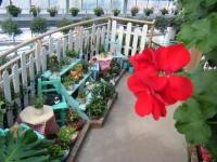 2018-01-14花と泉の公園ベゴニア館145