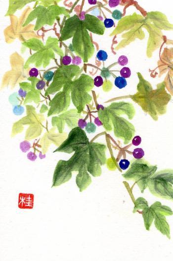 ゴシキノブドウ