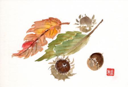 ドングリ&落ち葉