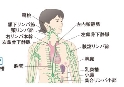 人体の構造 画像