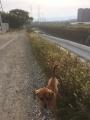ごん太と松尾川沿いを散歩