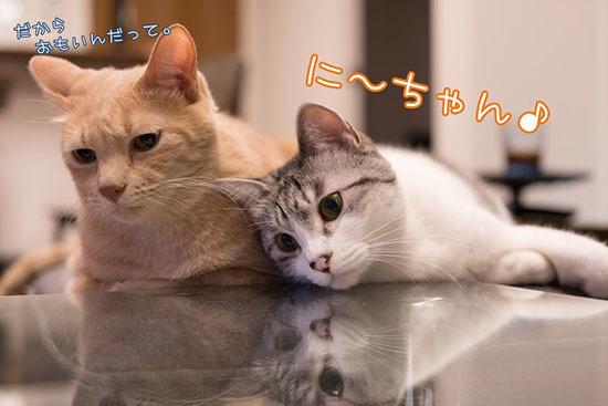 171004_pikachabi.jpg