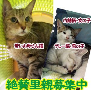 bannerBoshu_qu_neko.jpg