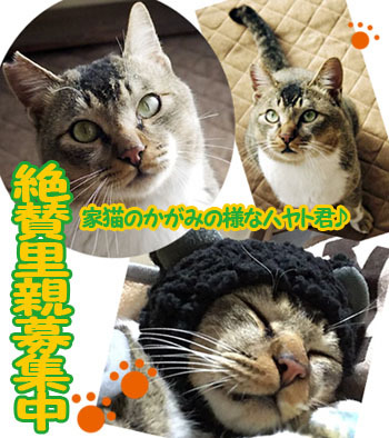 hayato_banner.jpg