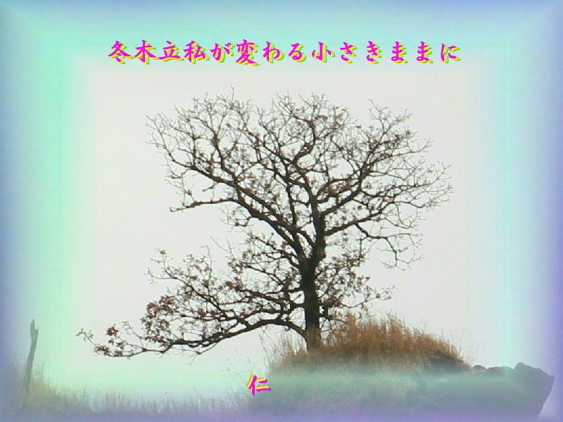 『 冬木立私が変わる小さきままに 』平和の砦575交心zry0603