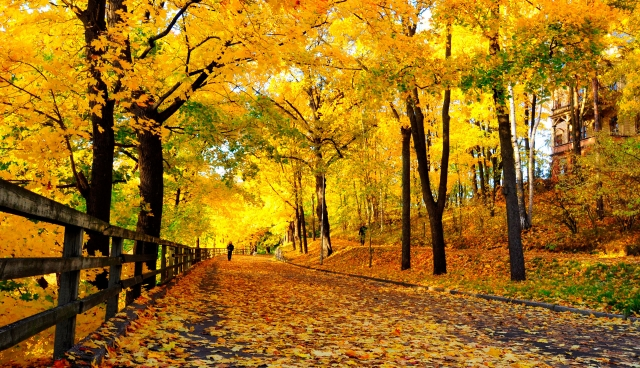 Header_Linnunlaulu_ruska_autumn.jpg