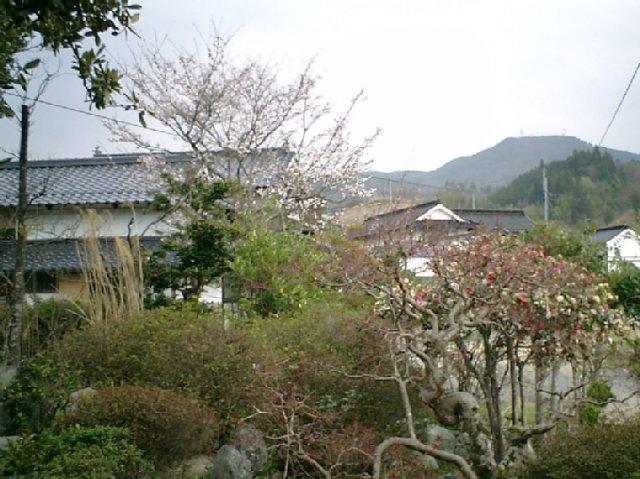 20040403.jpg