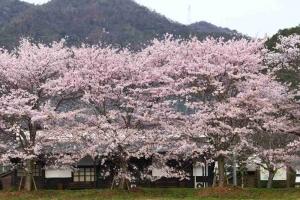 鍛冶屋線市原記念館 桜満開 松原茂光 2017フォトコン入選