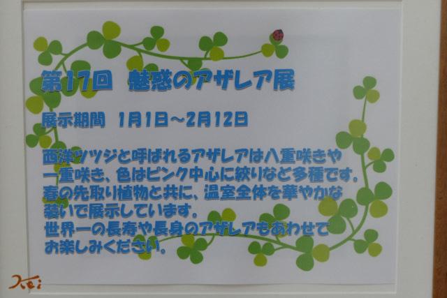 20180105アザレア13