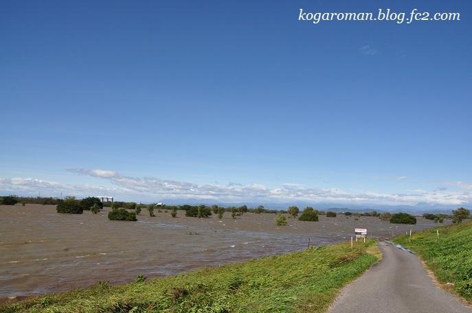 台風後の渡良瀬川2