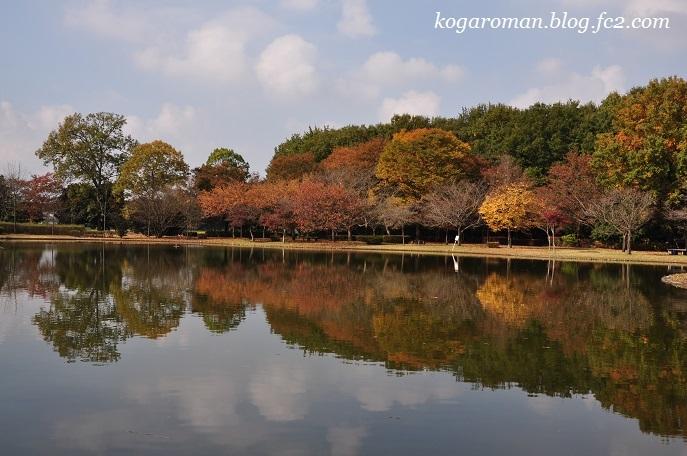 野木の公園で冬桜4