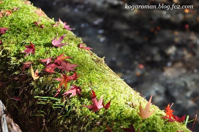 蓬莱山の紅葉3