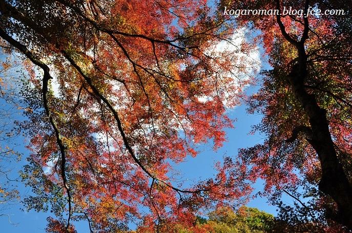 蓬莱山の紅葉4