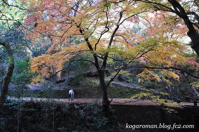 蓬莱山の紅葉5