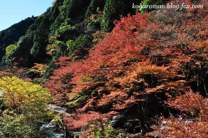 蓬莱山の紅葉9