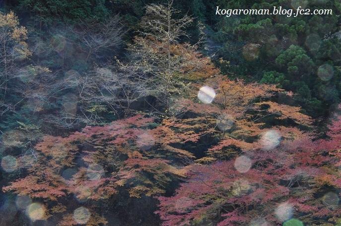 蓬莱山の紅葉10