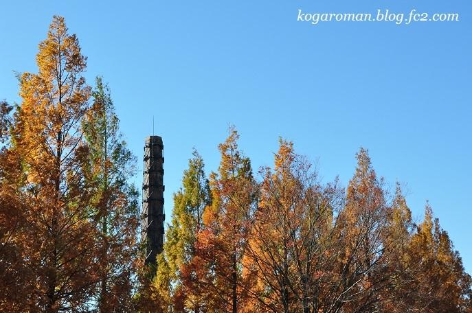 煉瓦窯とメタセコイア4