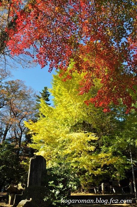 野木神社の黄葉2
