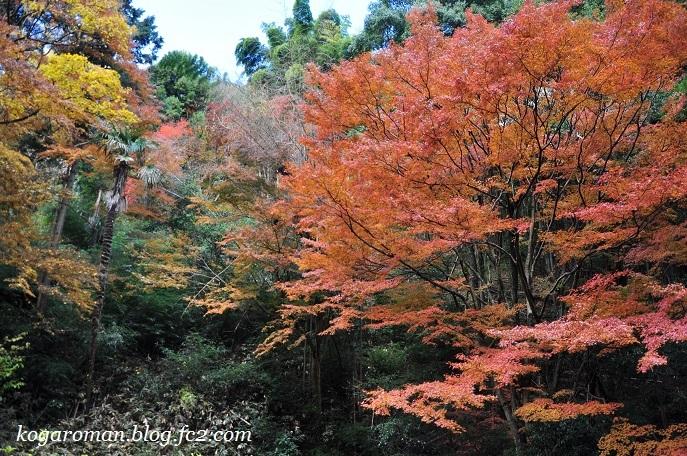 太平山の紅葉7